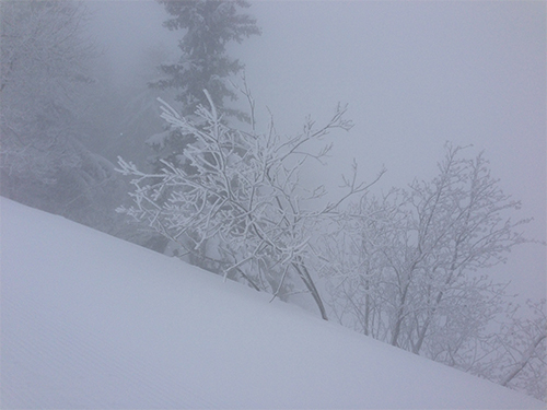 Winter-fog-and-snow
